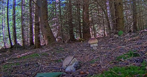 Kamera má nový objekt zkoumání. Pozorovat můžete hned dva nové hříbky.