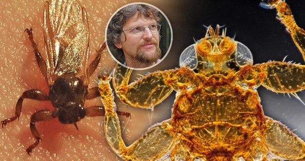 Kloš zvyšuje svoji početnost v posledních deseti letech, říká odborník na parazitický hmyz docent Jan Votýpka.