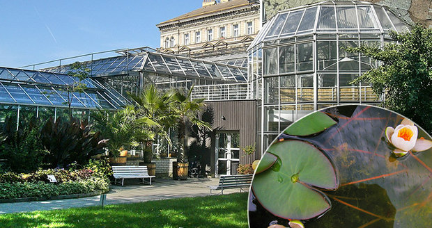 Botanická zahrada Albertov