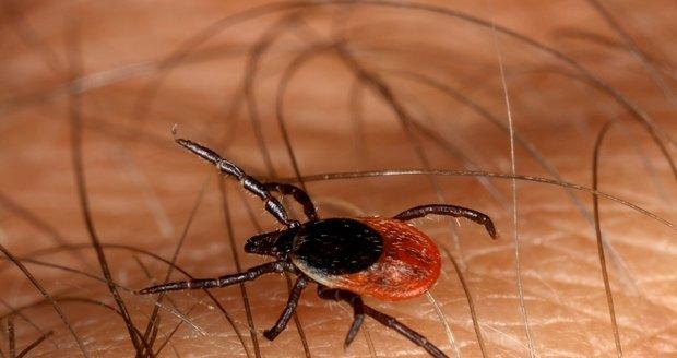Klíště je kvůli nemocem, které přenáší, velkou hrozbou pro člověka (ilustrační foto)