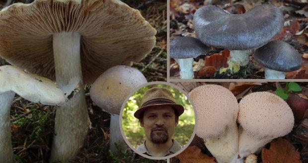 Mykolog Michal Mikšík radí, jak najít výborné jedlé houby mezi prašivkami.