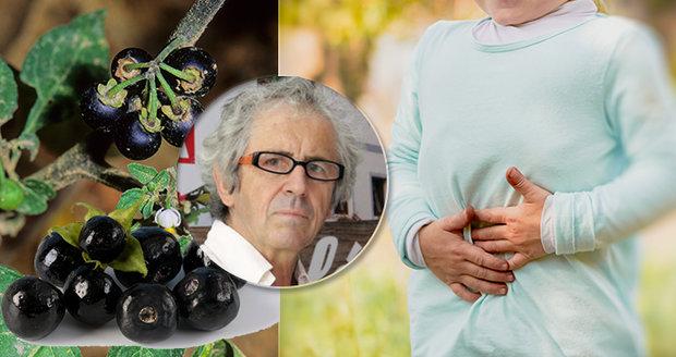 Toxikolog Jaroslav Klán upozornil, které rostliny mohou být v létě pro děti nebezpečné.