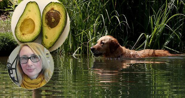 Otravy hrozí z letního koupání v rybníku i avokáda.