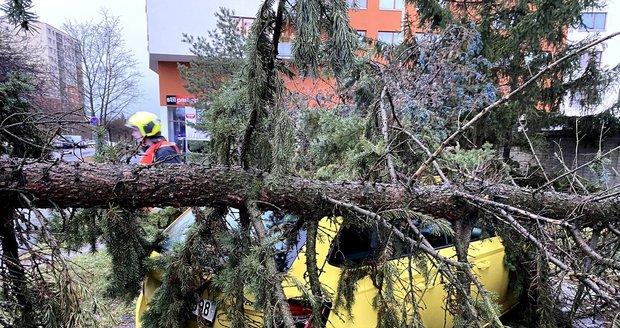 Vlivem větru v Praze popadaly stromy.