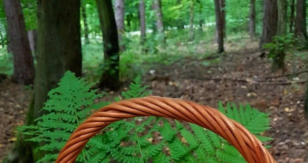 Dokonalé lesní zátiší, nemyslíte?