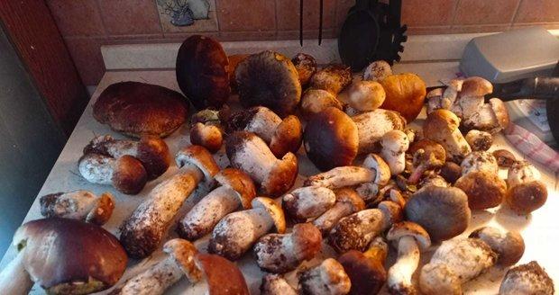 Miri Součková z Karlovarska si na houby odskočila jen na kraj lesa a za půl hodiny našla pěknou hromadu.