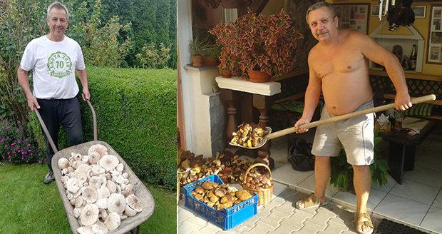 Houbařské žně v českých lesích: Na hřiby s lopatou a kolečkem