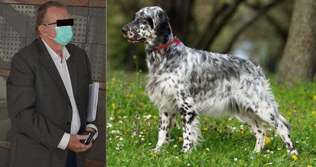 Nezbedné štěně uteklo loni v říjnu z pozemku Petra B. (59) z Ostravy a srazilo motorkáře (60). Soud případ podmínečně zastavil.