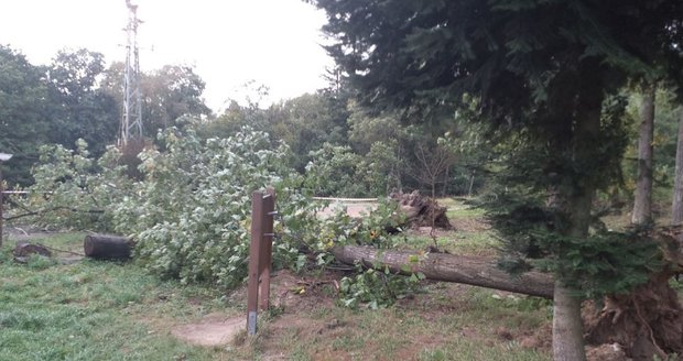 Vítr lámal stromy v Jihomoravském kraji (3.10.2020)