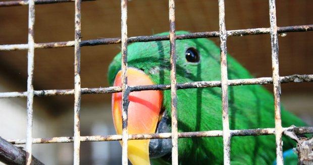 V záchranné stanici ve Vysočanech se Věra Přibylová stará o zraněná nebo odložená divoká a exotická zvířata.