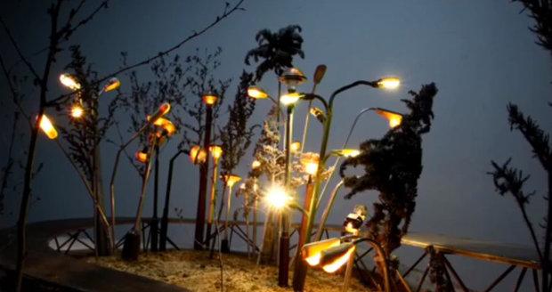 Světelná zahrada