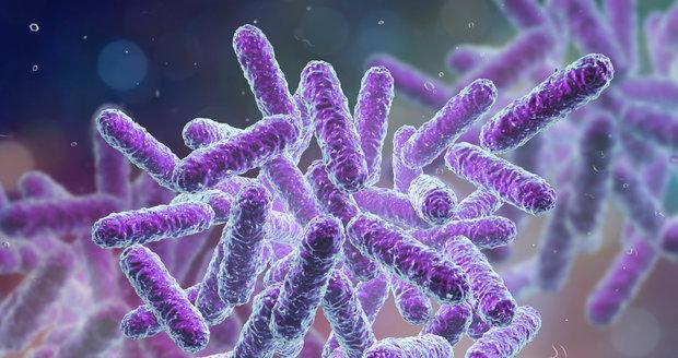 Ne všechny bakterie, které žijí v našich střevech, jsou škodlivé. Řada z nich utváří naši mikroflóru, a tím i imunitu.