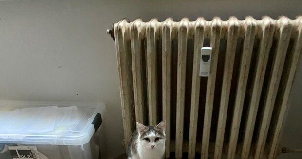 Veterináři odebrali chovatelce z bytu v pražských Horních Počernicích 41 koček, z toho devět koťat. Byly chované v nevhodných podmínkách a nacházely se ve špatném zdravotním stavu