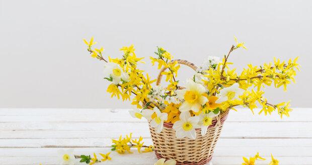 Košík plný květů. Nakombinujte větvičky zlatého deště třeba s květy narcisů.