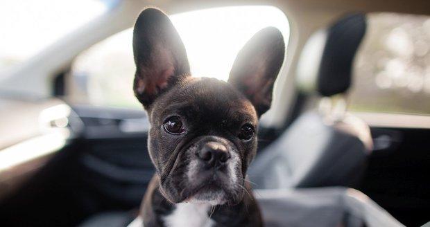 Psa nikdy nenechávejte samotného v autě. Ohrožujete tím jeho život!