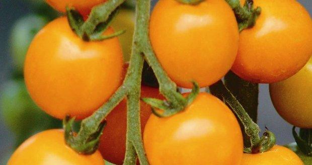 Neorganická rajčata jsou podle britského výzkumu sladší než ta organická