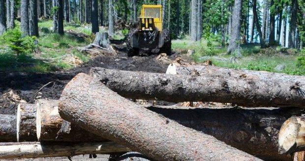 Kůrovec ničí i silnice. Jurečkův úřad chce přispět na jejich opravy