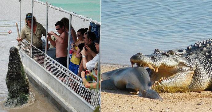0c05cd9a27d Čelisti smrti rozlomily i krunýř  Krokodýl si pochutnal na želvě ...