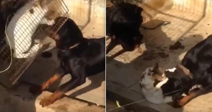 ab9822ebfb5 Muž z Dubaje poslal své dva psy