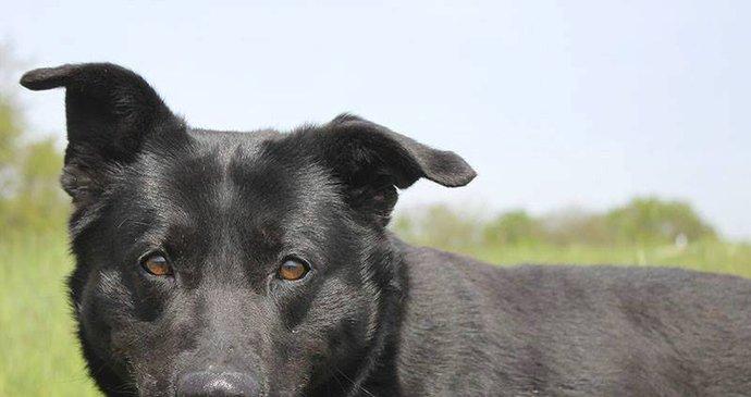 Černý pes kočička