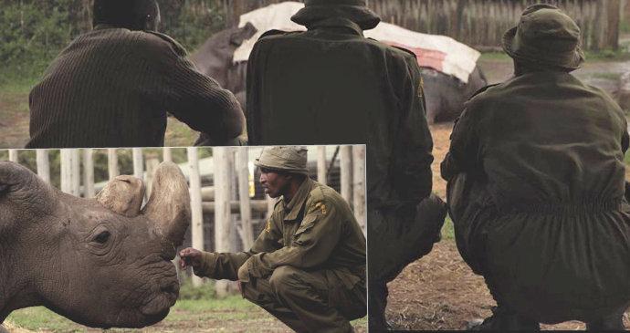 Poslední snímky nosorožce Sudána  Ošetřovatelé ho nechtěli opustit ... e40986e322