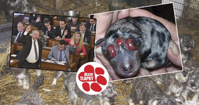46d91498dc1 Jak moc trápí poslance týrání zvířat