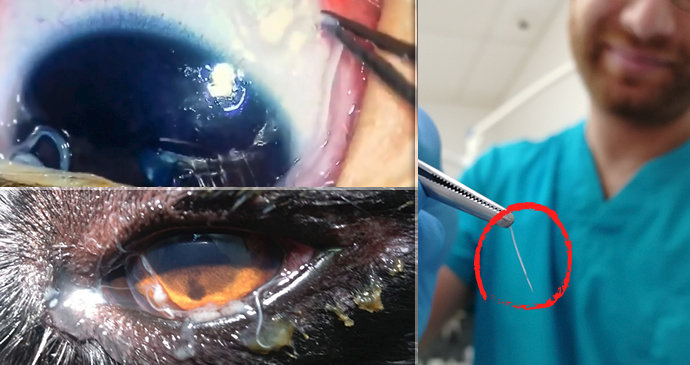parazit u oku psa