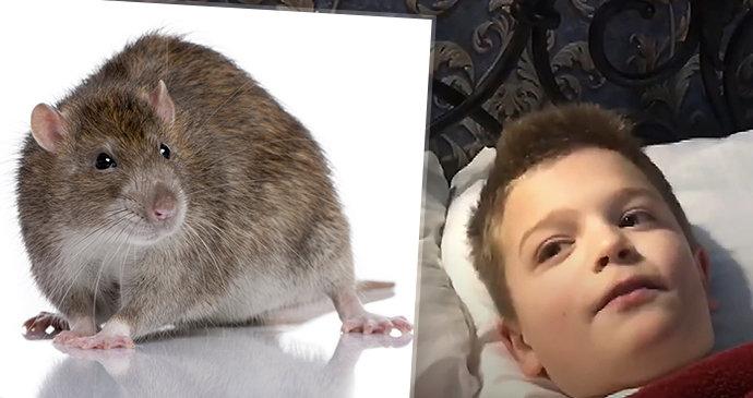 Přes 50 dětí se otrávilo: Snědly potkaní fekálie ve školní jídelně!