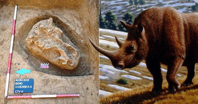 Lovci mamutů v Brně! Archeologové našli 18 tisíc let starou lebku obřího nosorožce