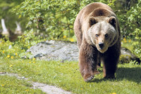 Medvěd u Strančic? Údajně ho viděli u autobusové zastávky, policie ale nic nezjistila