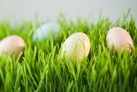 Na poslední chvíli: Velikonoční osení za pouhé tři dny!