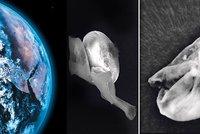 Ve vesmíru je život? Vědci objevili živé organismy, které nejspíš nejsou ze Země!