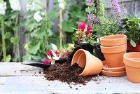 Jak správně přesadit květiny, aby neuhynuly? Teď je čas!