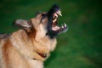 Dva psi v Holešovicích napadli děti! Dívka musela do nemocnice, případ řeší policie
