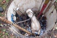 Kůň spadl do studny: Z ledové vody ho tahali karlovarští hasiči!