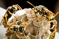 Po bodnutí vosou zemřel! Agresivní hmyz zabil muže u Orlické přehrady