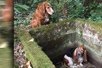 Vydrž, kamarádko, neopustím tě: Fenka týden hlídala psici uvězněnou v nádrži