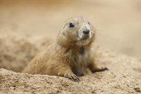 Severoameričtí hlodavci budou mít v pražské zoo nové útočiště. Co dalšího zahrada chystá?