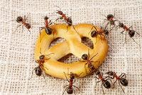 Otravný hmyz? Nejúčinnější babské rady a tip na domácí repelent