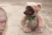 Medvěvčík je tu: Pozor, hrozí předávkování roztomilostí!