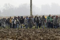 """Německý úřad o uprchlících: Mají jen """"základku"""", někteří neumí číst ani psát"""