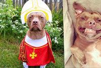 Pitbul jako Rocky či papež? Pejsek baví ulítlými kostýmy