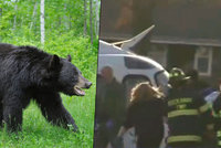 Medvěd napadl skautského vedoucího. Šelma ho v jeskyni pokousala téměř k smrti