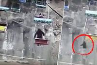 Muž v zoo seskočil z lanovky: Přímo nad výběhem s tygry!