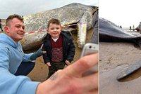 Je libo selfie s mrtvolou? Uhynulé velryby přilákaly stovky lidí kvůli focení a vandalskému sprejování