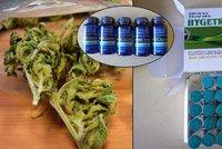 Celníci na Ruzyni bojují s drogami, od ledna jich našli víc než za celý rok
