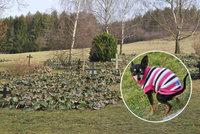 Hnus v Lidicích: Na hrobech se válí psí výkaly, neukáznění návštěvníci ničí pietu
