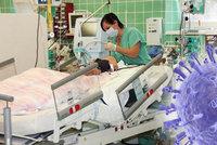 Prasečí chřipka na Chomutovsku: Dvě seniorky skončily v nemocnici na ARO