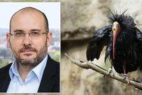 Z pražské zoo uletělo 18 ibisů. Prvního odchytili u redakce Blesk.cz