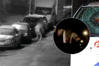 Nahý šílenec běhal po Kladně a rozbíjel auta  Jsem vlkodlak a599b0fe1c